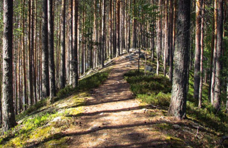 Petkeljärvi, Taitajan Taival by paddling and hiking, Koihu Adventures